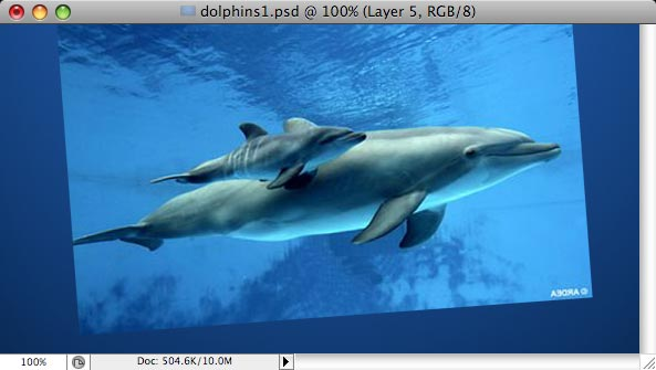 Dolphins - making of - Step 2