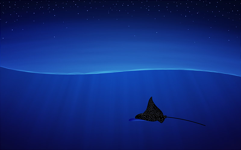 Spotted Eagle Ray - making of - Step 39