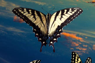 Like In My Dreams photo Effects in adobe Photoshop cs2