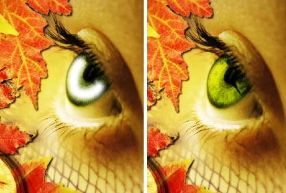 Autumn  Wallpaper - Photo Effects