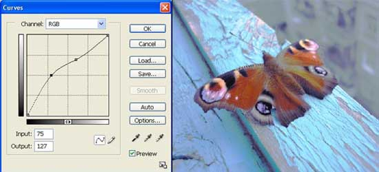 Butterfly photo editing in adobe photoshop cs