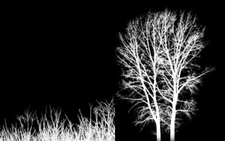 Fairy Night photo editing in adobe photoshop cs